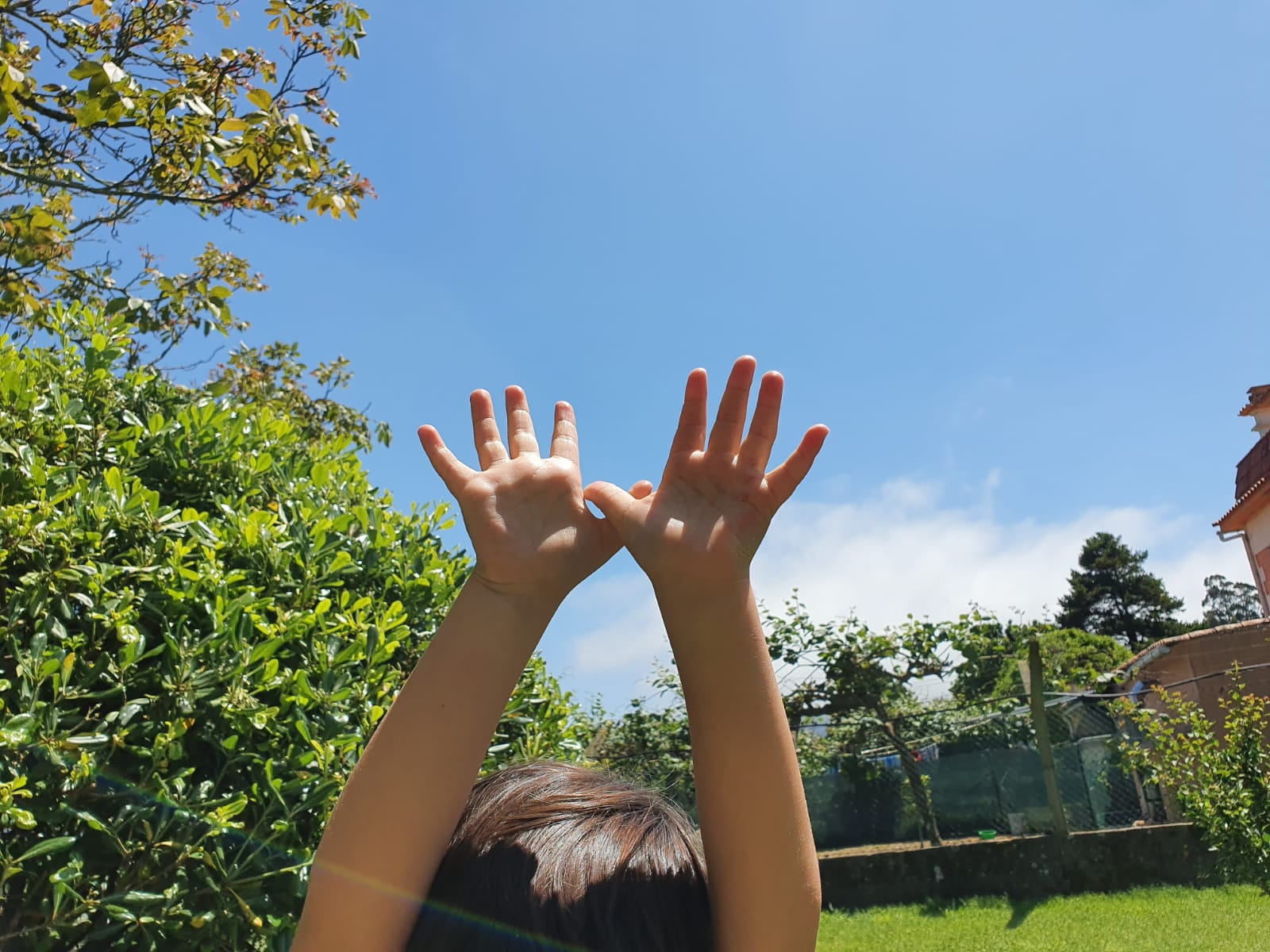 Bolboreta no ceo de Camposancos