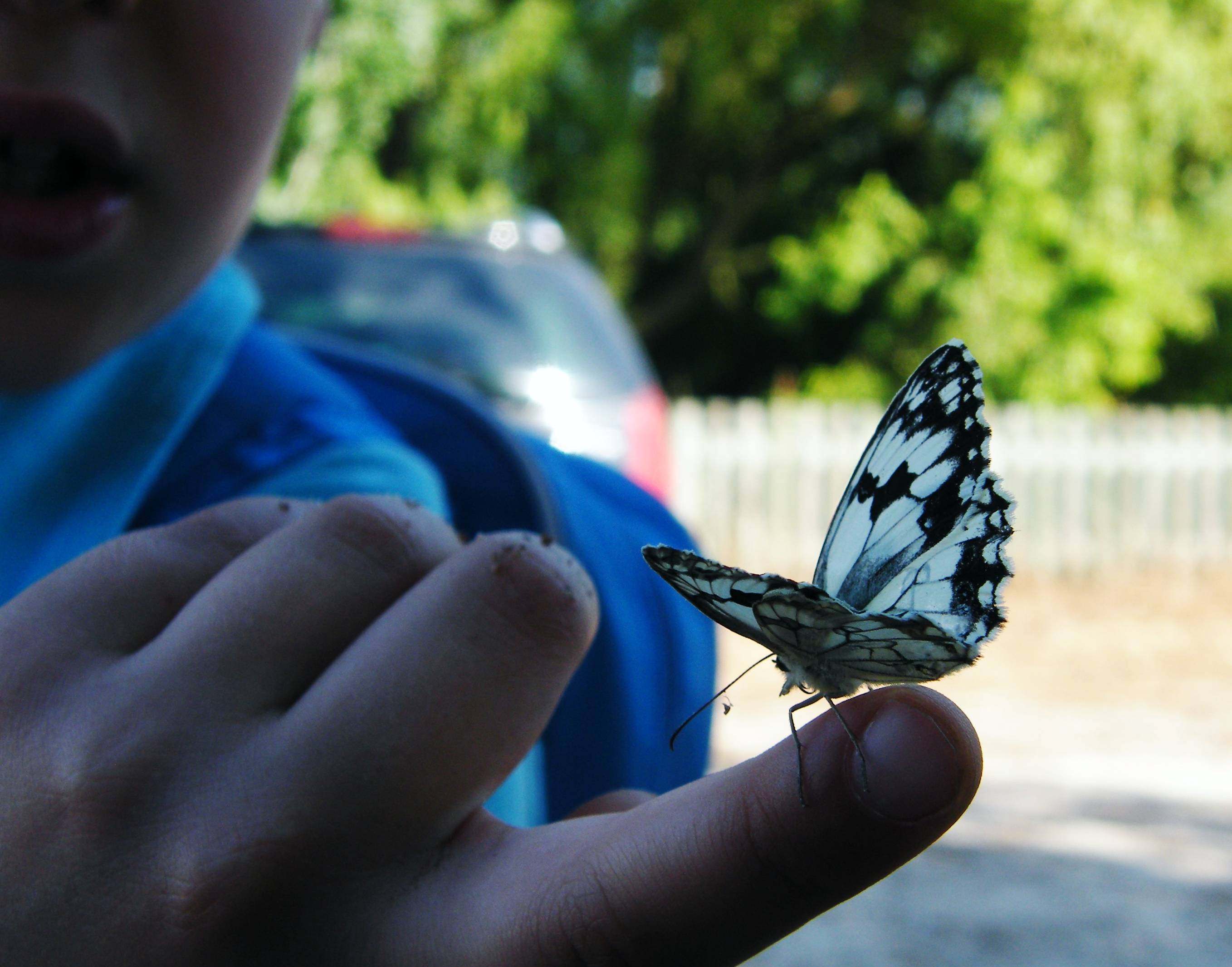 The kid and the marbled white