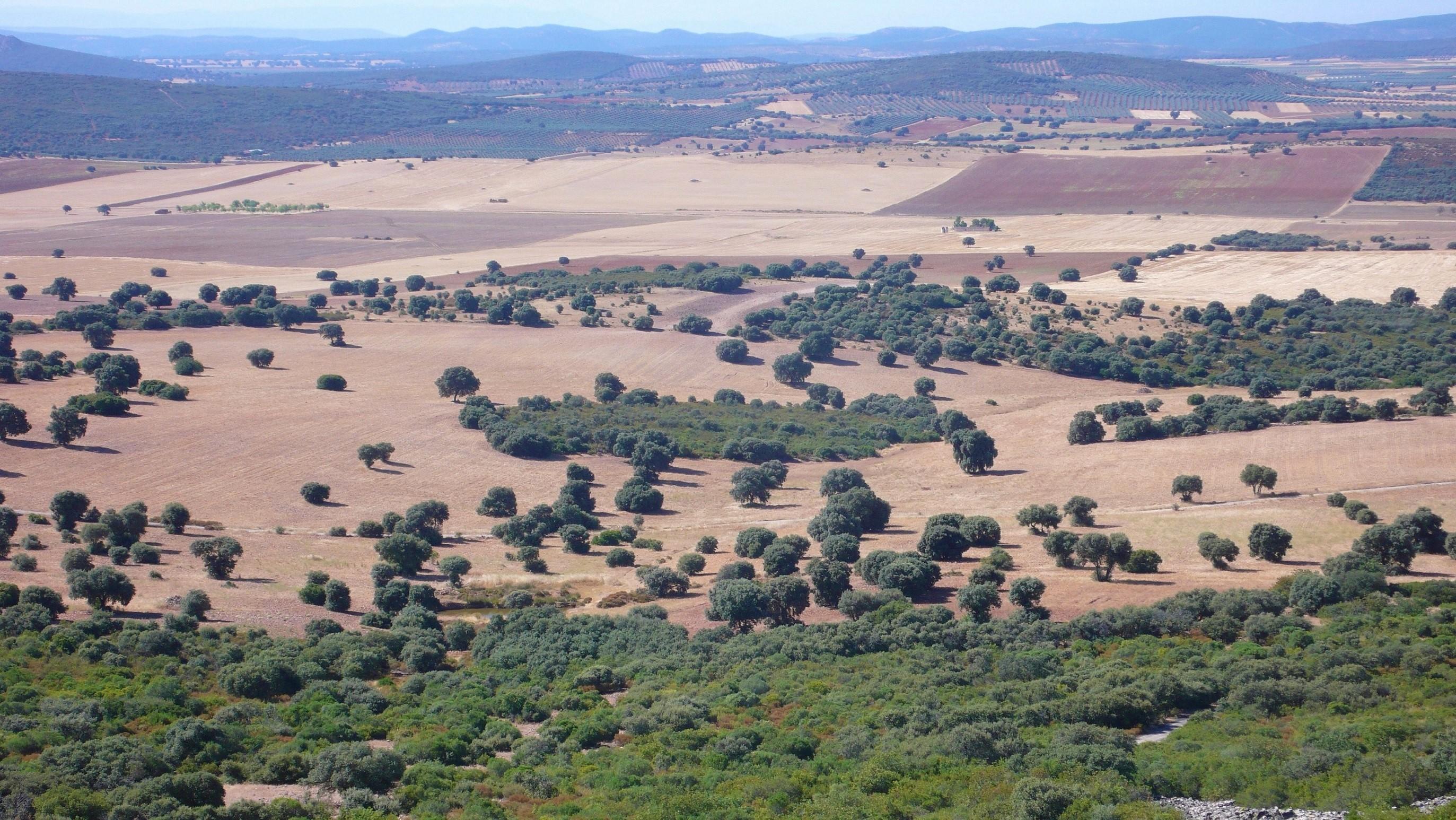 Mosaico agrícola y forestal del Campo de Montiel